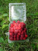 First Red Raspberries