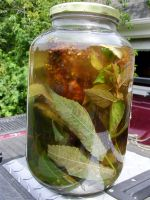 Sumac and Lemon Basil Sun Tea