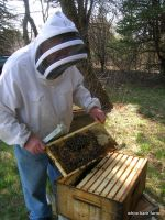 Roger, from Franklin Honey, checking the hives at the farm