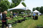 Shoppers at the Annual Plant Sale