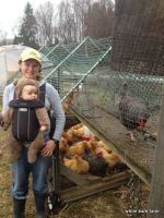 Teddy Graham and the Chickens