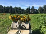 sunflowers on the golf cart