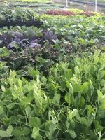 Sea of Seedlings