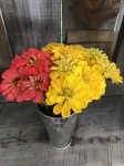 coral and yellow zinnias