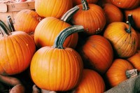 Squash - Pie Pumpkins