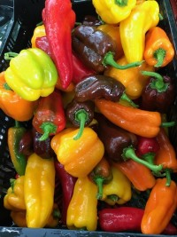 Peppers - colored