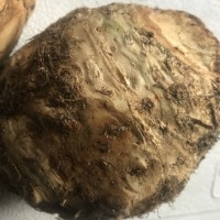 Produce: Upswing Farm Celery Root