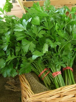 Herbs - Parsley