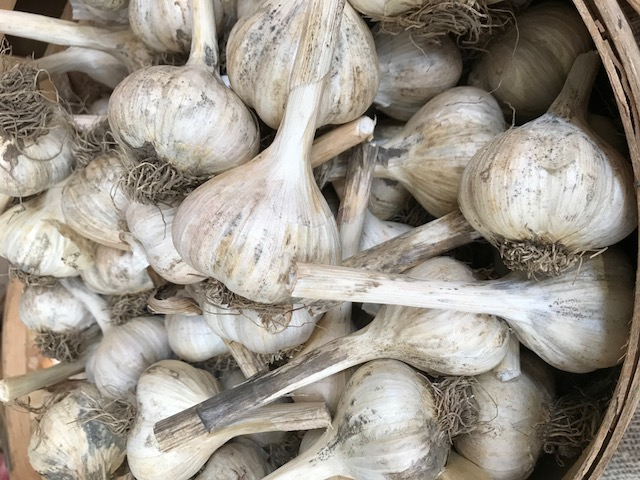 Garlic - large