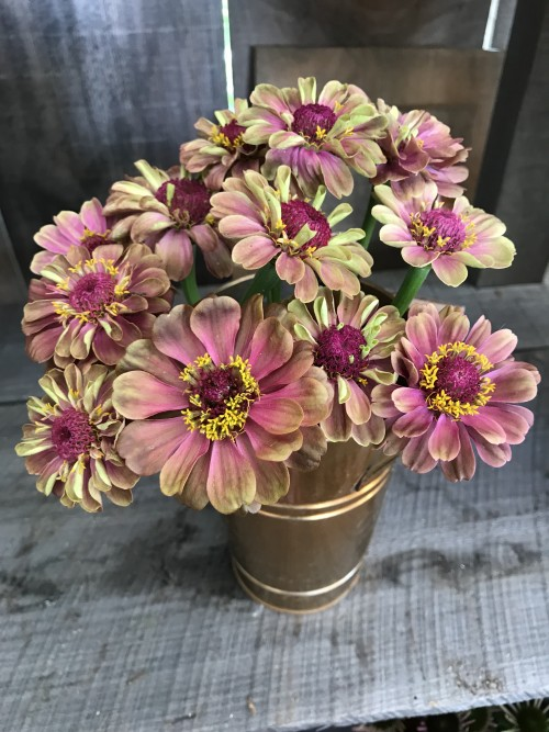 Flowers - Queen red lime zinnias