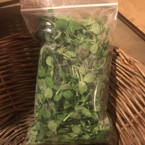 Produce: Pea Tendrils