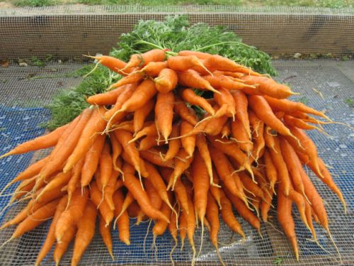 Clean Carrots!