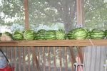 Watermelons on our shelves