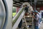Shelled beans being graded