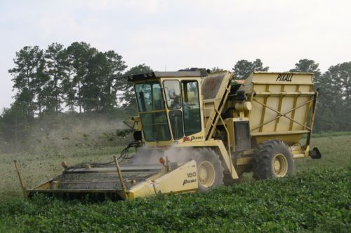 Our bean picker harvesting butter beans