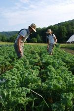 Cory and David harvesting kale