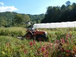 Lacey mowing the spent flower field