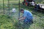 Dean helps to move the pig fence