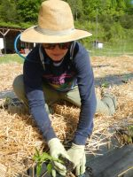 Gretchen planting peppers