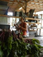 Piles of beets make Gretchen SO HAPPY!