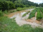 the creek rises up into the pepper field