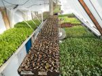 a very full greenhouse