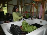 Rachel washing radishes