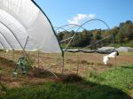 disassembling the haygrove tomato umbrella