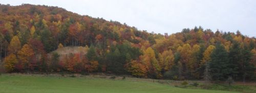 Fall colors on the farm