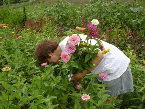 Migrant labor cutting flowers