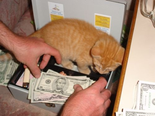 Kitty Amin counts money