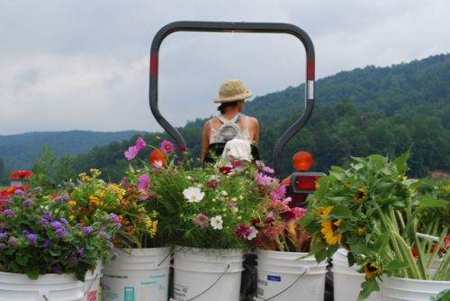 Shiloh hauling the flower harvest