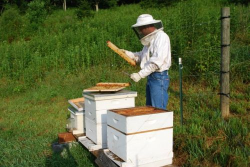 Cory working the bees