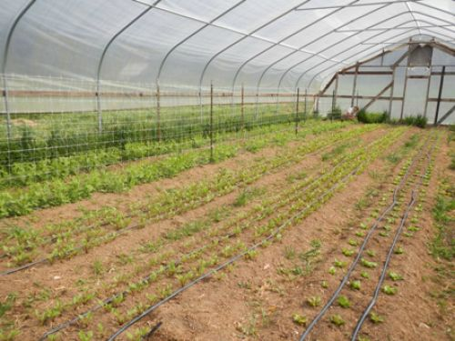 the early spring hoop house