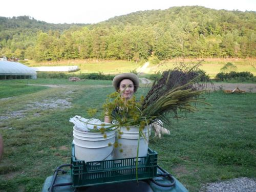 Lacey gathering grass to make bouquets
