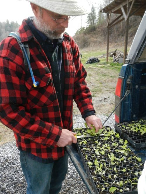 "Jason harvests ""micro-greens"" from extra lettuce flats"