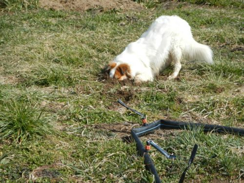 Tully demonstrates her own rooting skills