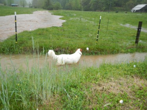 """Tully finds an alternative """"creek"""" to play since hers is too strong"""