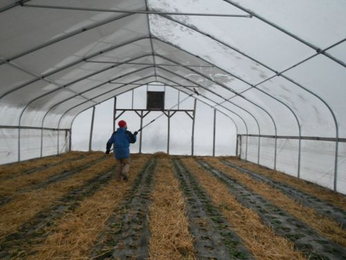 Jason pushing snow off from a hoop house
