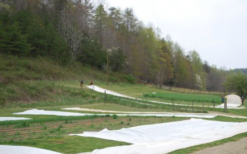 Drying and folding up row covers after the April15th hard freeze