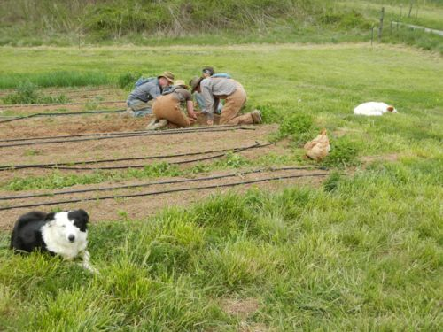 The strange entourage of two dogs and a chicken await the crew's attention