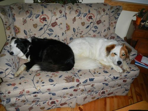 Tully and Trixie share a comfy nap after a hard day's play