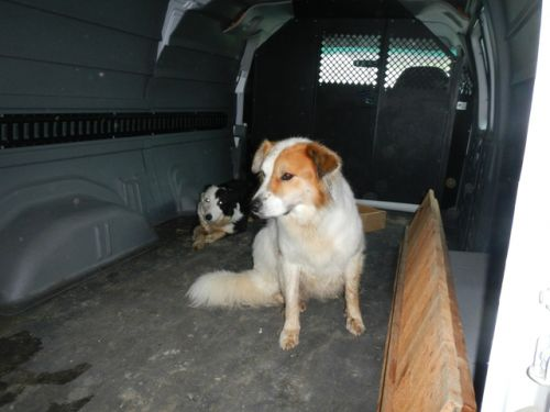 Tully and Trixie jumped in the open van to hide from the thunderstorm