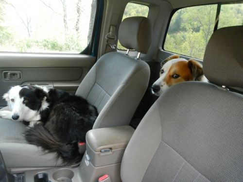 Tully and Trixie had had enough of being left behind.  They got in the truck and wouldn't get out.