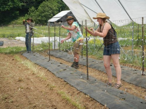 Lizzy, Kyle and Nathan building tomato trellis