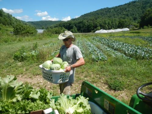 Nathan hauling in cabbage