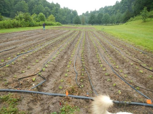 planting fall crops on a perfect day
