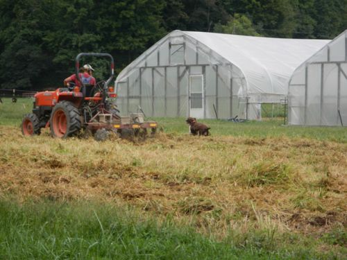 Bailey chasing Kyle on the tractor