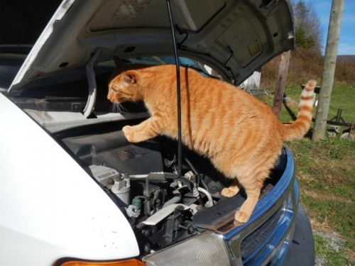 Kitty Amin helps out with mechanics
