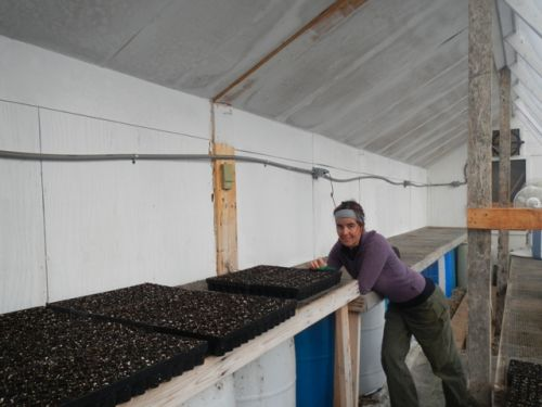Shiloh sowing the first seeds in the greenhouse